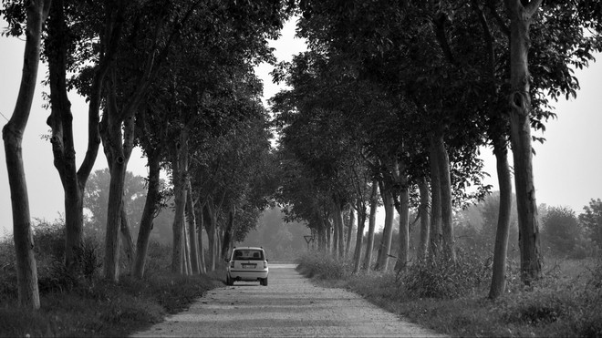 1920x1080 wallpapers: car, trees, bw, road (image)