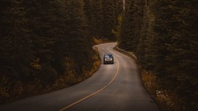 road, auto, trees, turn - wallpapers, picture