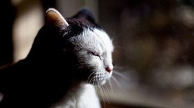 cat, face, shadow, look, tired - wallpapers, picture