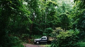 SUV, forest, trees - wallpapers, picture